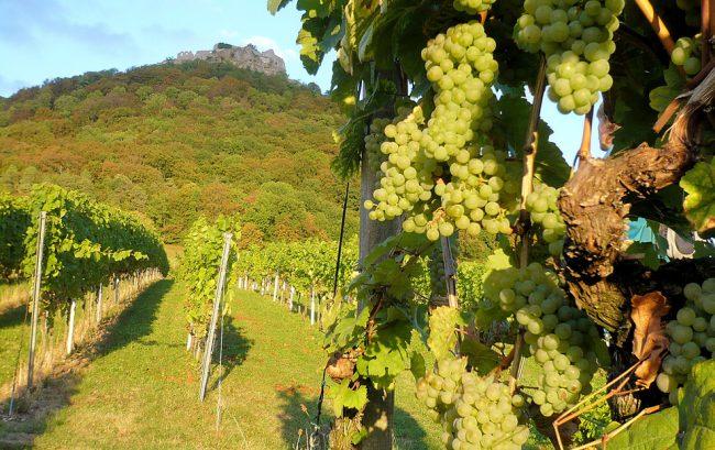Spannendes Weinjahr